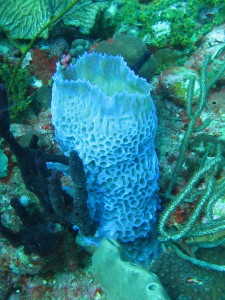 There are tons of cool sponges to look at. Some of them literally glow in the sunlight.