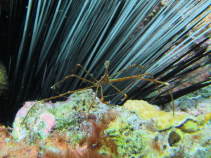They also like hanging out around certain anemones.