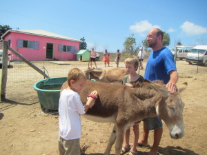 The donkey sanctuary was so much fun. Who knew that brushing down a donkey was so soothing?