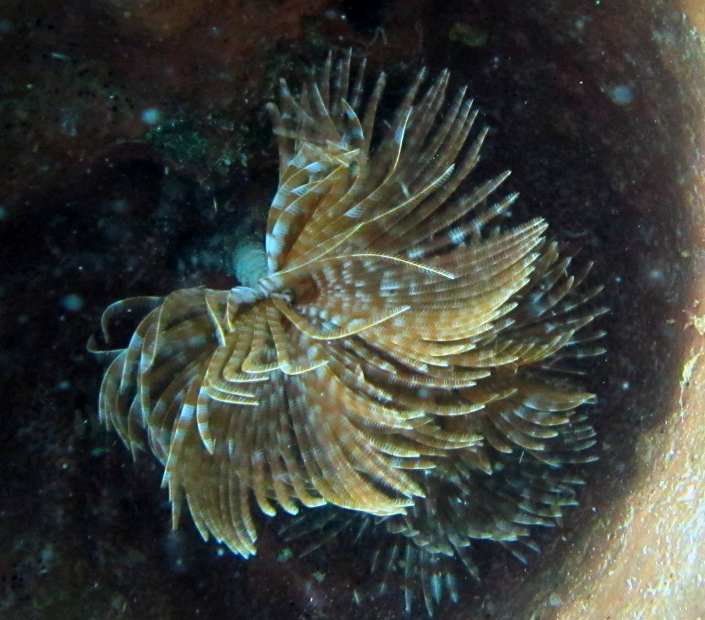 Featherduster worms look like feathery flowers, but they are really worms. Snap your fingers close to them and they disappear!